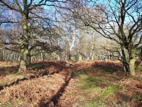 Medieval holloway- archaeology in Sherwood Forest